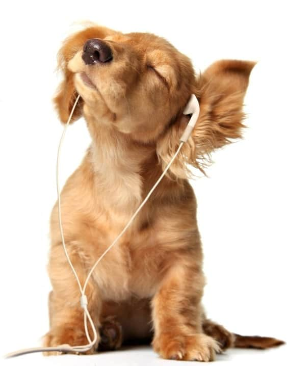 dog with headphones.jpg