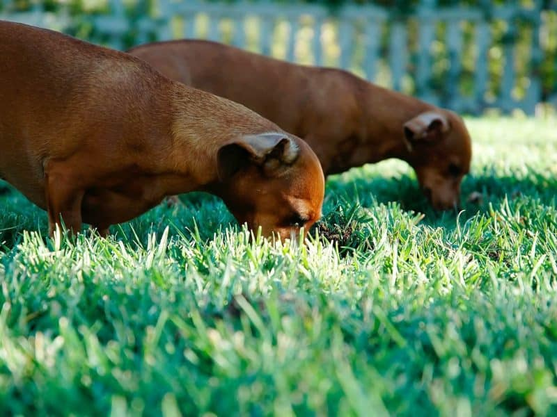 Are You Prepared For Your Dog's Social Side?