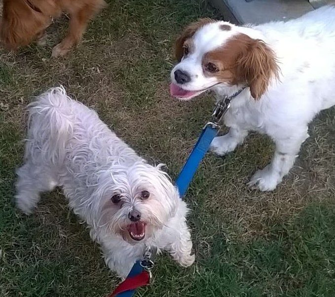 best in home dog trainers near me