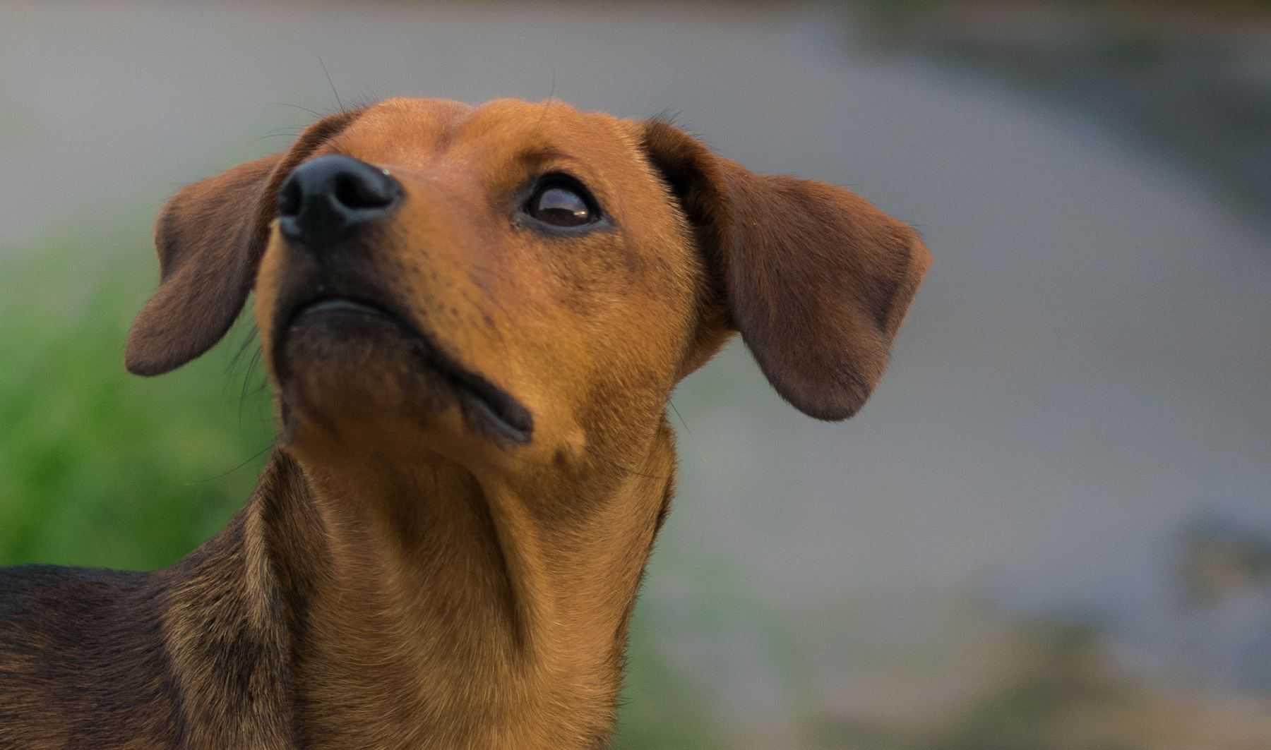 In-home Pet Training for Fresno & Clovis